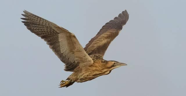 Het geluid van moerasvogels en vleermuizen in de nacht