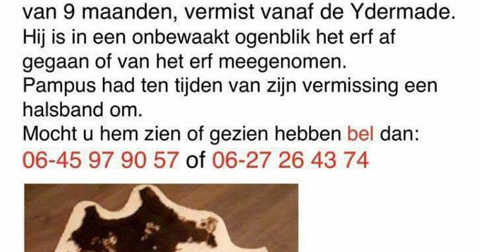 "Hond ""Pampus"" vermist"
