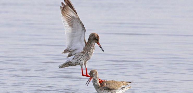 Het herkennen van weidevogels in het waterwingebied in de Onnerpolder