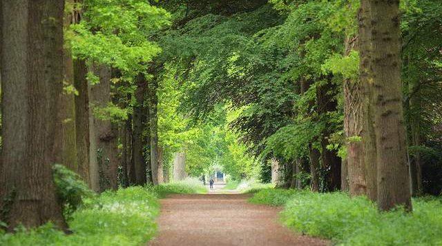 Landschapsbeheer Groningen gaat Quintusbos herstellen