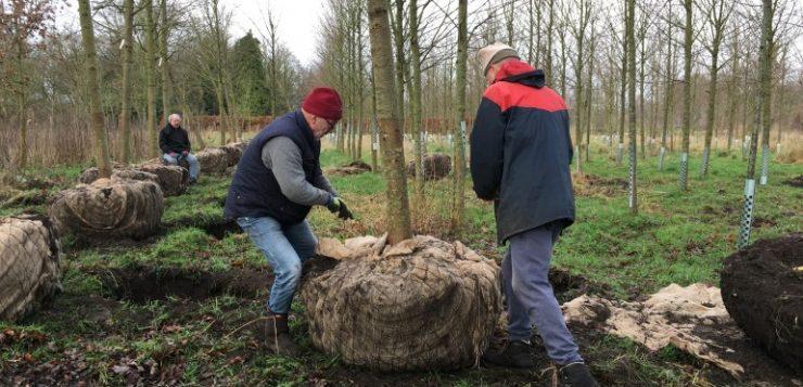 Nog 44 grote lindebomen te koop bij Voedselbos te Glimmen
